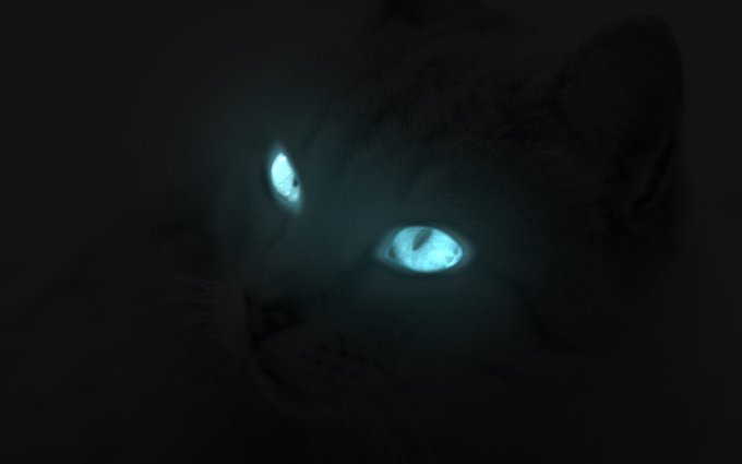 glowing_cat_eyes_by_o_chir